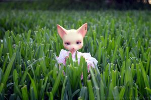 Field of Dreams by tinaheart