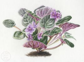 African Violet 2 by Aneyana