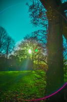 2013.12.04 Harrogate Valley Gardens Stock by TMProjection