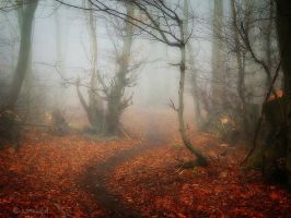 Last Autumn by Weissglut