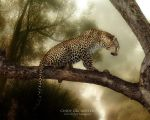 Leopard by CindysArt