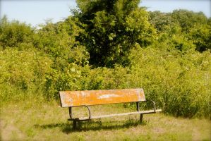 Molding bench in the grassland by MNgreen