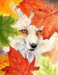 Autumn Fox by Sidonie