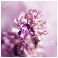 Lovely flower by ironicna