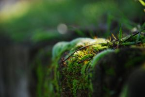 Mossy walls of the dungeon by AcunCan