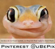 Geckos are awesome by dxdiagbg