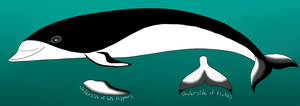 southern right whale dolphin OC by Dark-Little-Darkling