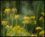 Etude in Yellow by mruqe