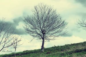 The Straight Tree by JoaoPhotography