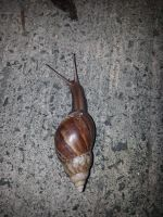 Snail 14Aug2014 3 by RiverKpocc