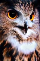 Eagle Owl by KrisVlad