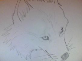wolf sketch by Ruka-Chan85