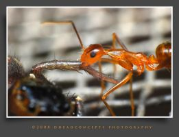 ant2 by dhead