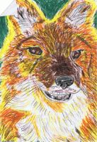 a dhole by ConkerTSquirrel