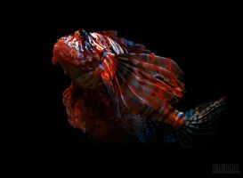 Firefish by yongle