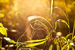 autumn evening by BellaSunny