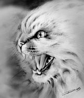 Angry by ROSSJCBR