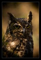Horned Owl. by feudal89