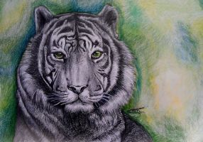 An eye of a tiger... by Lmk-Arts