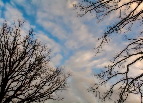 Branches Above 0167-012117 by KeithPurtell