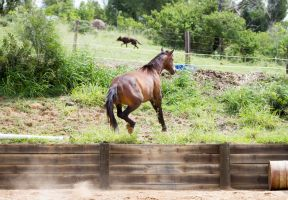 KM showjump leap view behind by Chunga-Stock
