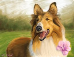 Collie Valentine by GumboSamurai