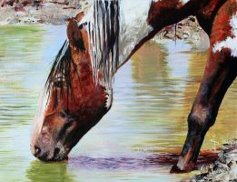 Painted Mustang by NorthumbrianArtist