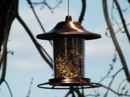Bird Feeder II by AppleBlossomGirl