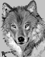 Wolf by roxmore