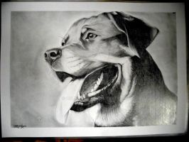 Rottweiler by OnlyPaper