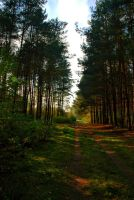 Forest Road 02 by elanordh-stock