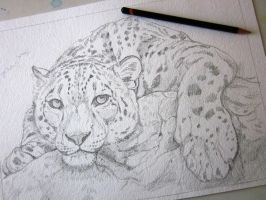 Leopard Sketch Preview by Aikya