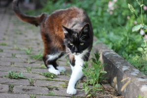 Cat Stock 28 by Malleni-Stock