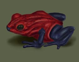 Frog STudy by floopate