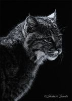 Bobcat 1 - Scratchboard by Misted-Dream