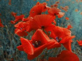 Red Inspiration by Callu