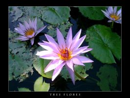 Tres Flores by estilodesigns