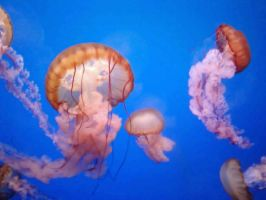 jellyfish by free-bubbles