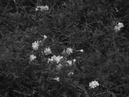 White Flowers by rouquinamour