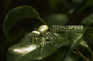 Techno Spider 3D by otas32