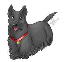 Scottish Terrier yay :D by xkatty