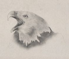 Eagle by Slow-Bullet