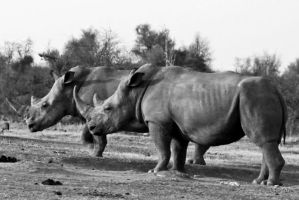 Have a good time with Rhinos by WhiteBook