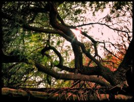 Autumn Entwined by Celestial22