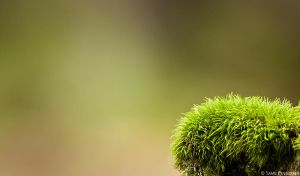 wide view moss by Puuronen