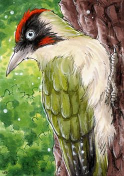 Green Woodpecker - ATC by Merinid-DE
