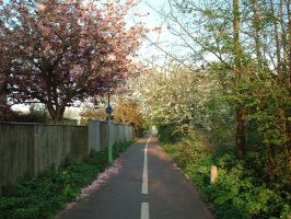Blossom on the cycle path by e-s-d