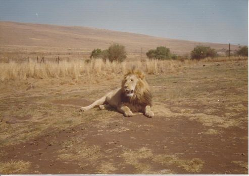 King resting by Cedautinger