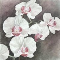 Orchids - the second version by Chicinikki
