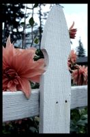 white picket fence. by punkgoddess